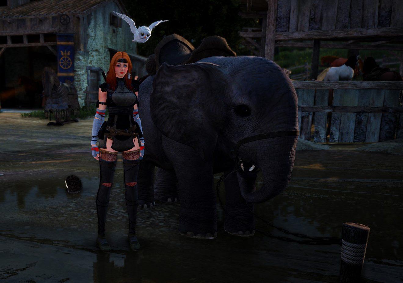 Getting a Miniature Elephant - Rebellicious